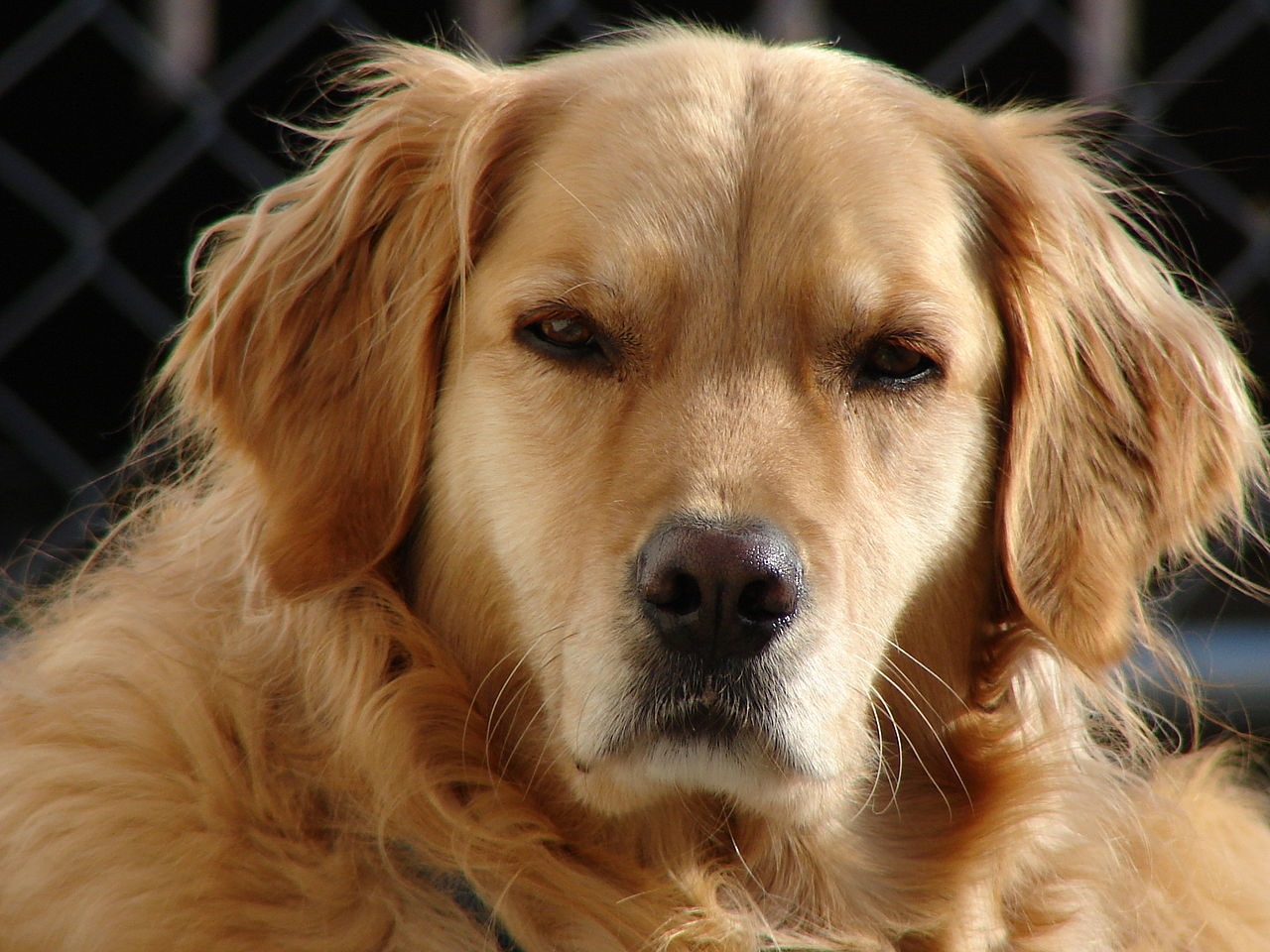 Les chiens n aiment pas les personnes qui refusent d aider leur propri taire gurumeditation - Personne qui repare les cheminees ...