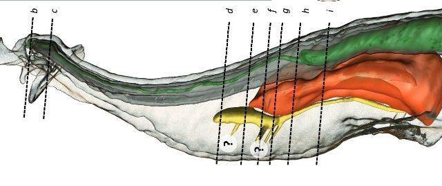 Embolus-araigne.jpg