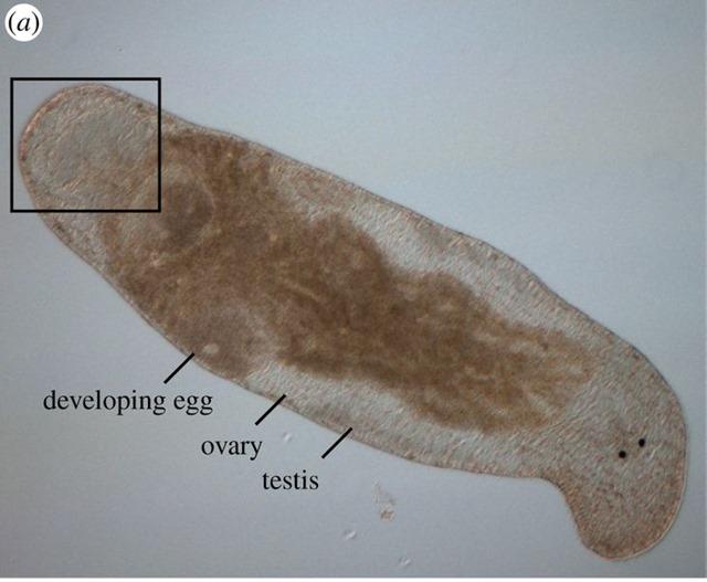 Hypodermic-self-insemination_thumb.jpg