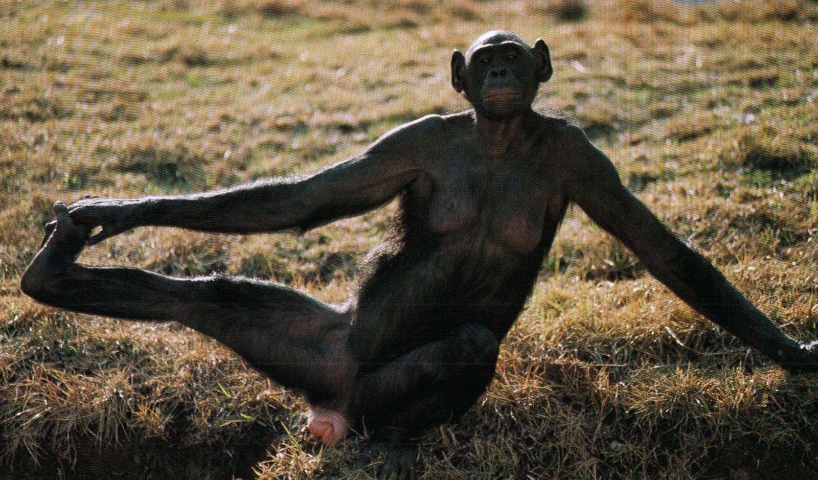 Si seulement nous avions la même sexualité que les bonobos