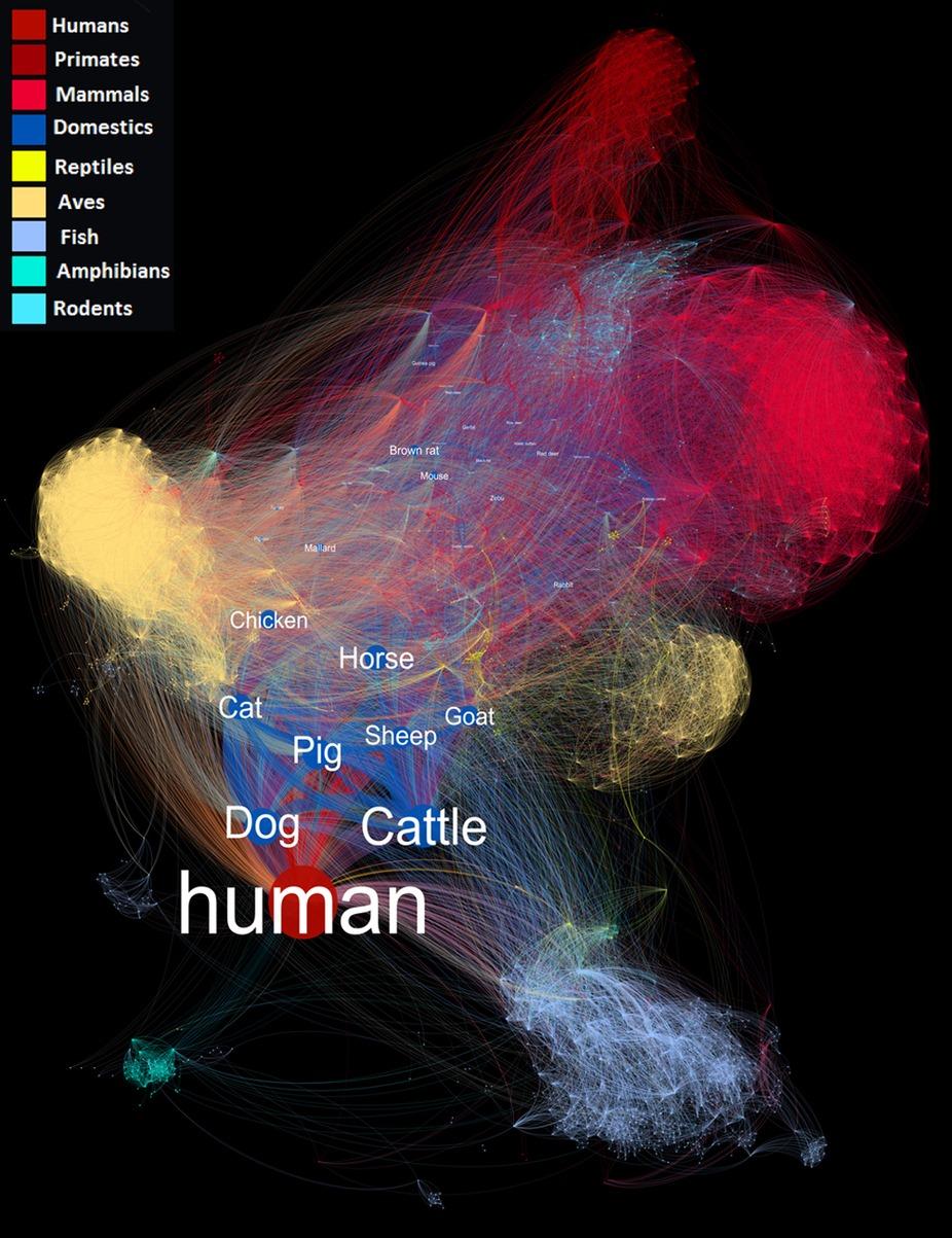 Visualiser la propagation des agents pathogènes entre les espèces