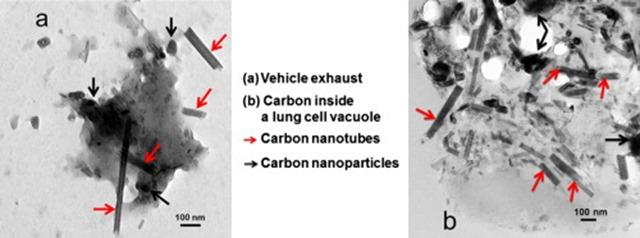nanotubes de carbone-TEM