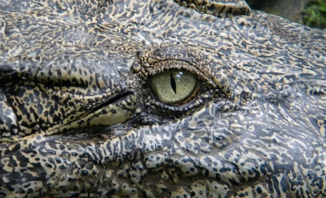 sommeil-crocodile.jpg