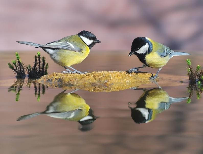 En écoutant les oiseaux - Victor Hugo Msange