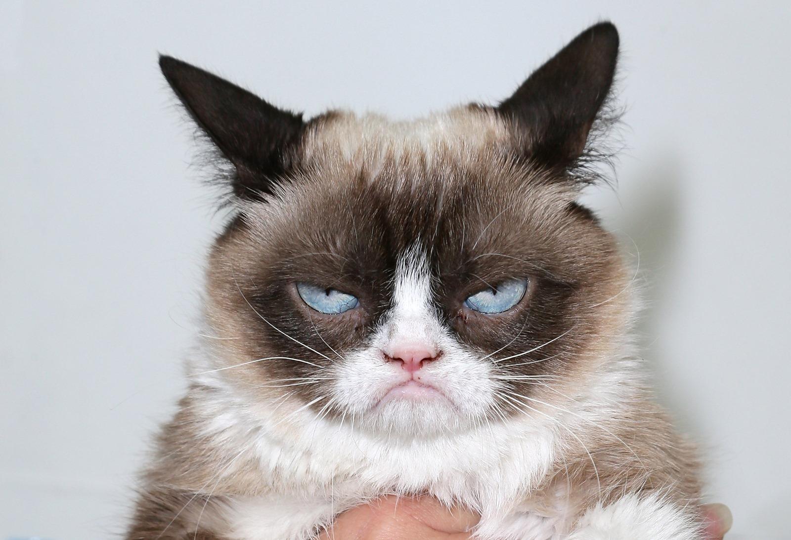 Les 25 signes qui pourraient révéler que votre chat est dans la douleur