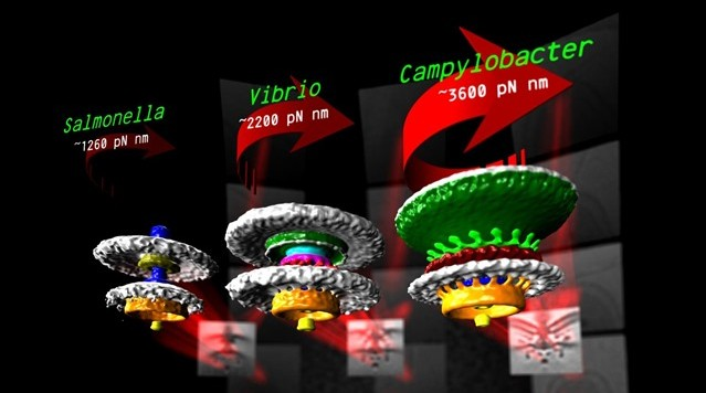 moteur-bactries_thumb.jpg