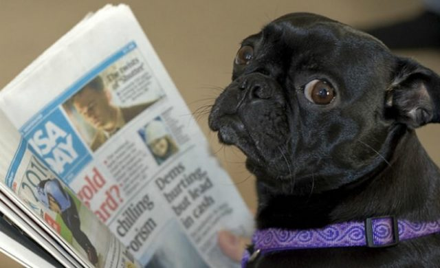 pug_newspaperFT.jpg