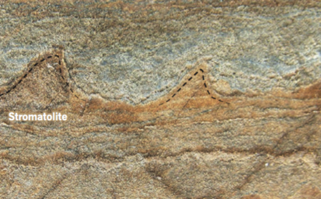 Isua-fossile