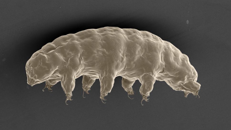 Comment l'indestructible tardigrade pourrait protéger les humains des radiations ?