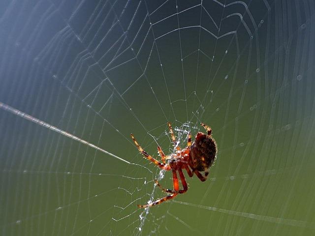 araignée-toile16