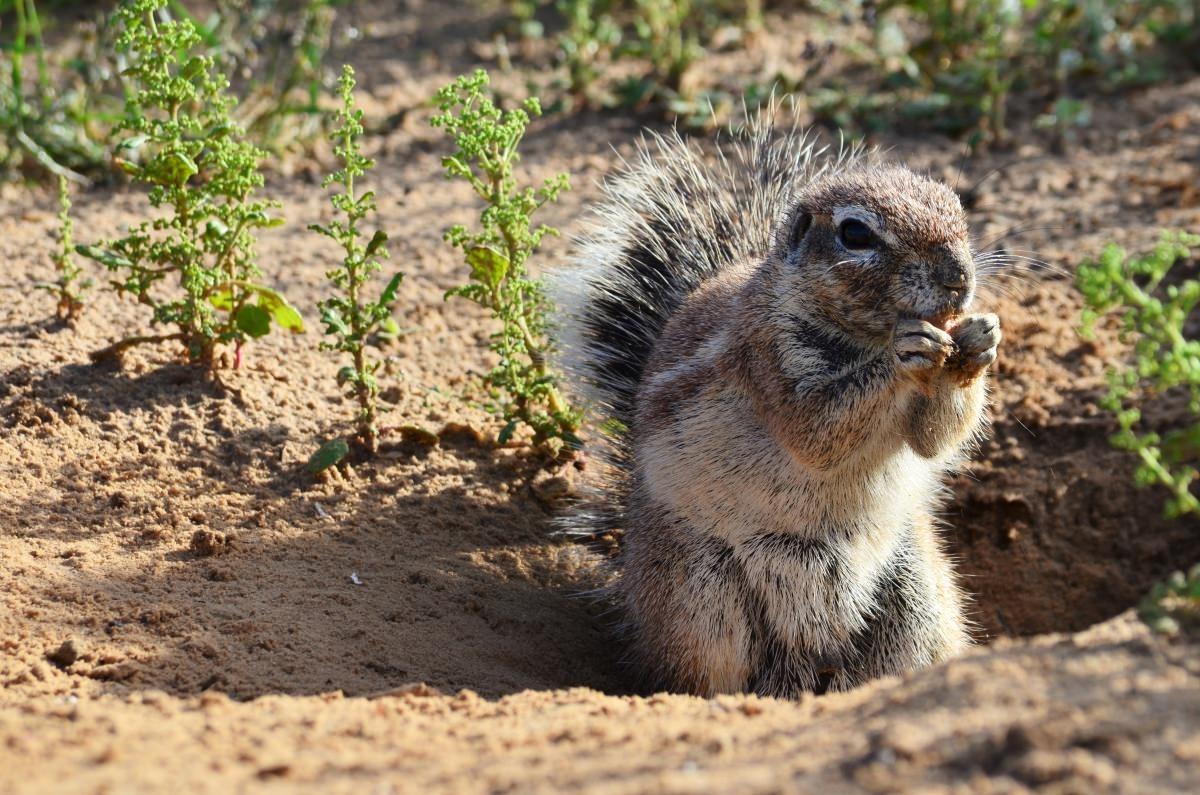 Des écureuils utilisent le Soleil pour cacher et retrouver leur nourriture