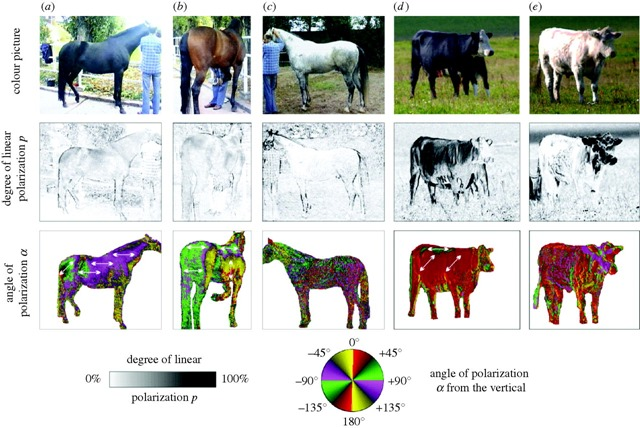 taon-chevaux2