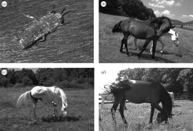 taon-chevaux