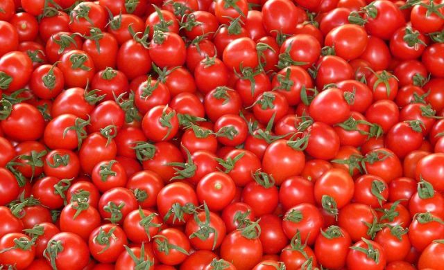 tomates-16.jpg