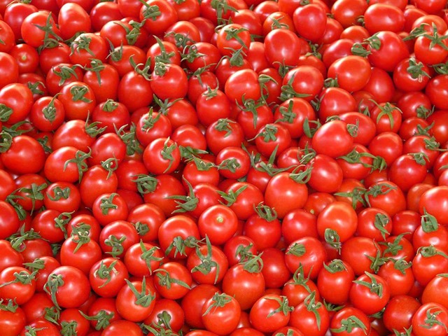 tomates-16