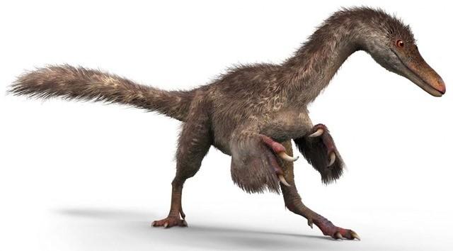 queue dinosaure-ambre-2
