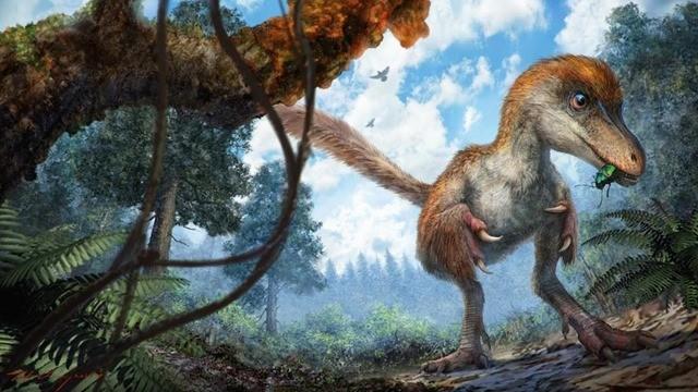 queue dinosaure-ambre-4