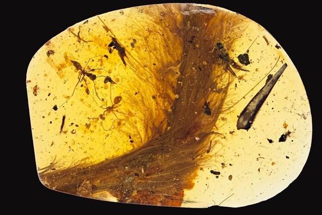 queue dinosaure-ambre-9