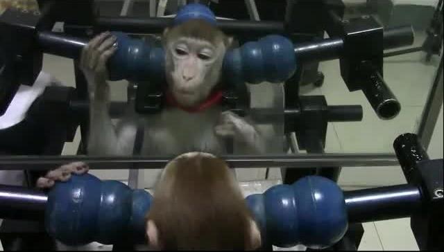 macaque-test-miroir3.jpg