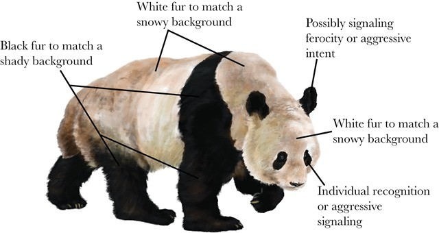 2panda-coloration-fourrure