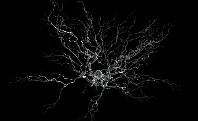 Neurone-SEM-2.png