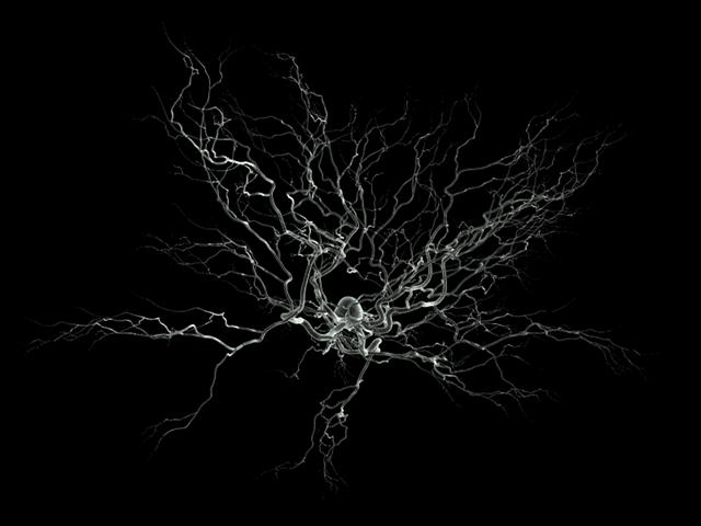 Neurone-SEM-2