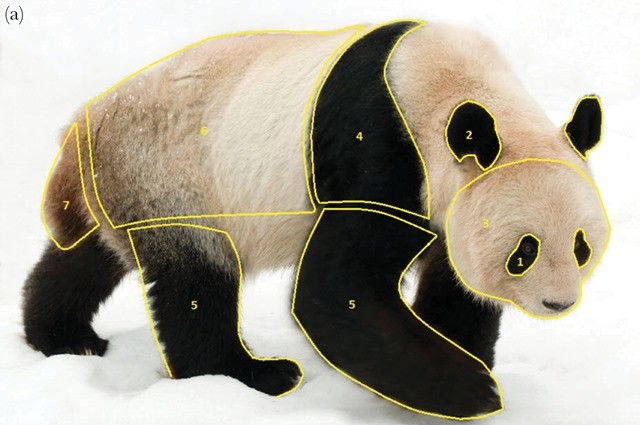 panda-coloration-fourrure