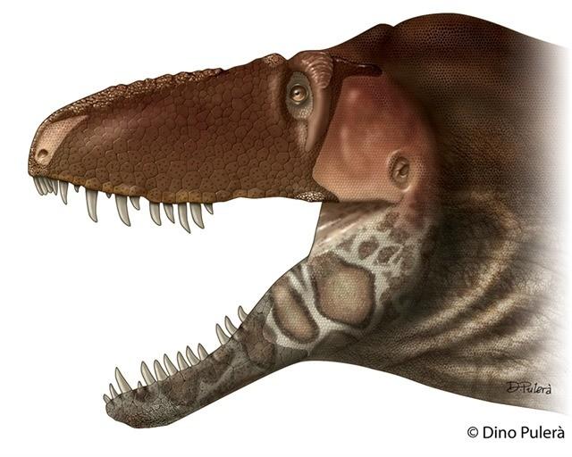 Daspletosaurus horneri3