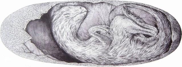 """Un dinosaure ressemblant au """"plus terrifiant poulet du monde"""" trouvé à l'intérieur de son énorme œuf ! By Gurumed.org        Beibeilong-sinensis-embryon-2_thumb"""