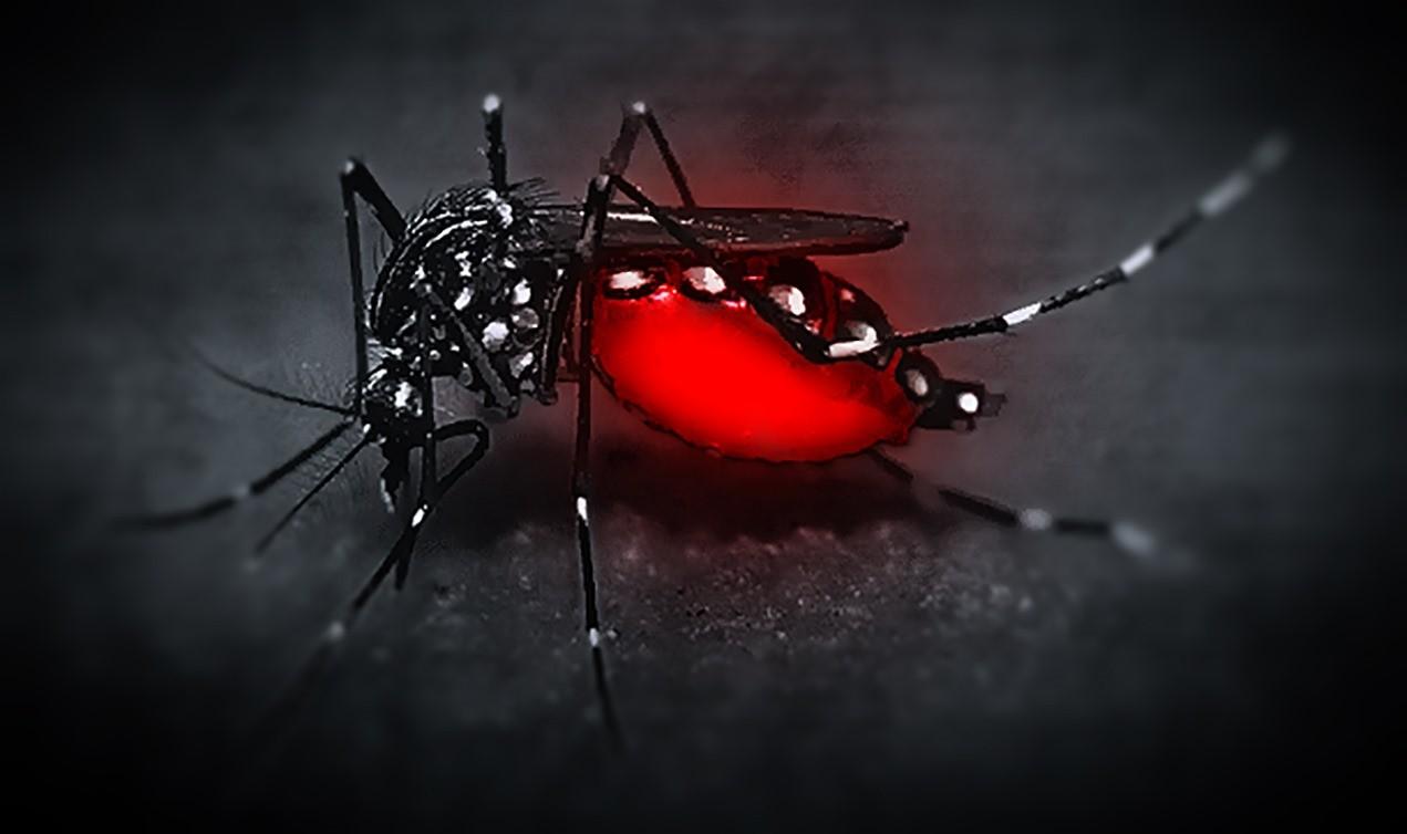 Si vous prévoyez de commettre un crime, prévoyez aussi l'anti moustique