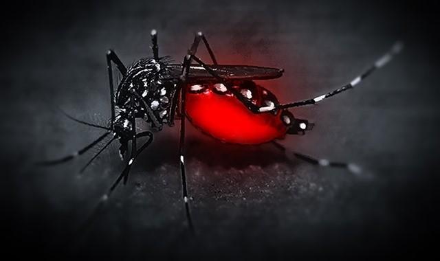 mosquito_omarotxoa