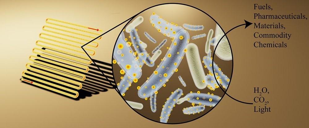 """Des bactéries """"Cyborgs"""" créées pour produire des produits chimiques utiles à partir de la lumière du Soleil"""