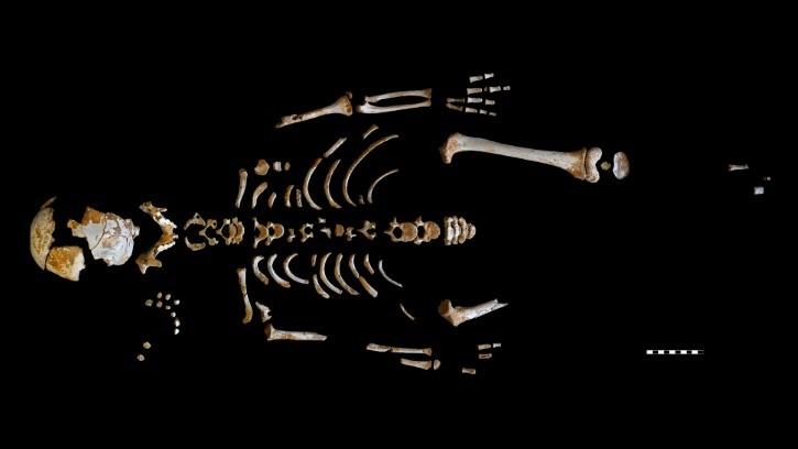 Les restes d'un jeune Néanderthalien révèlent pourquoi ils disposaient d'un plus grand cerveau que le nôtre