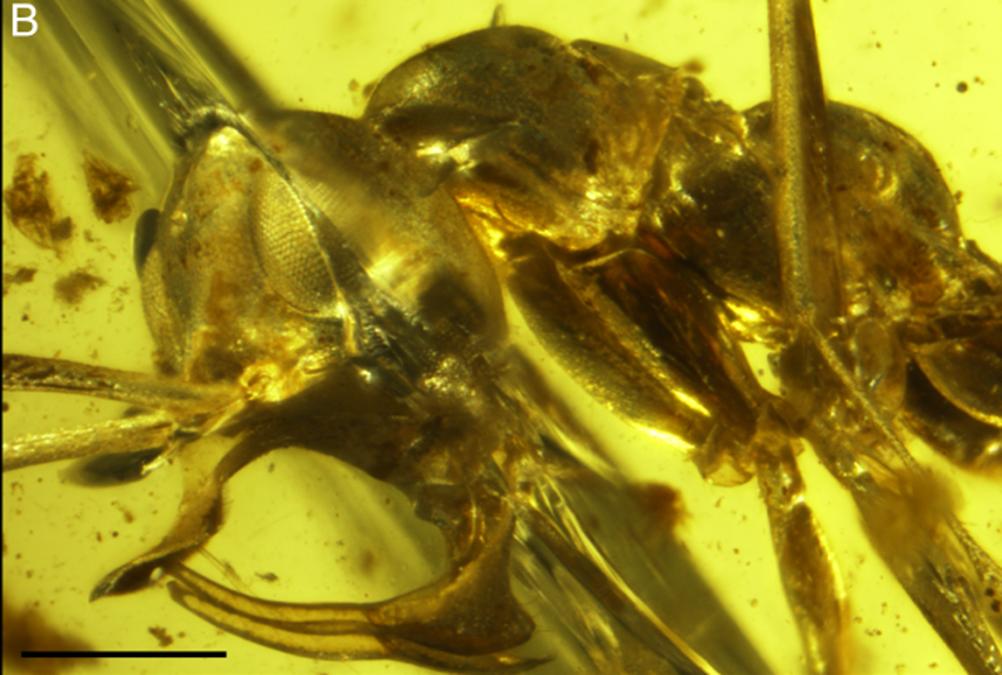 Une ancienne fourmi vampire avec une corne en métal sur sa tête