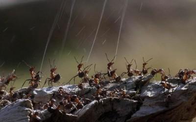 Pulvérisation d'acide de fourmis sur une main