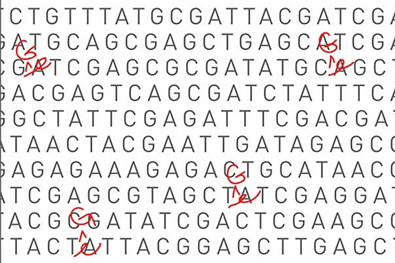 L'amélioration d'une célèbre technique d'édition génétique permet de cibler encore plus précisément le génome (deux études)