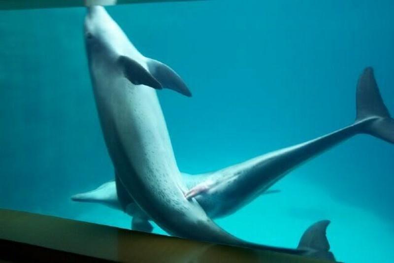 accoupl-dauphins1