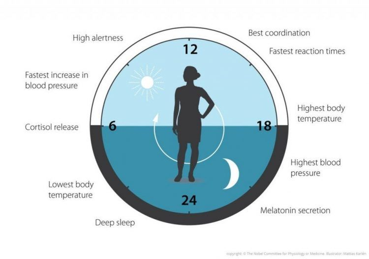 Le prix Nobel de Médecine pour la découverte du rythme circadien