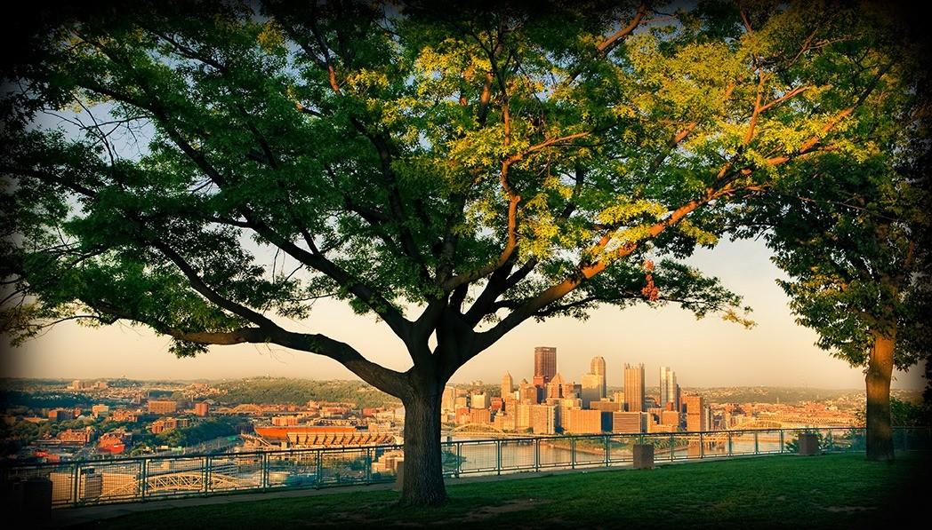 L arbre des villes pousse actuellement plus vite que l for Arbre qui pousse rapidement
