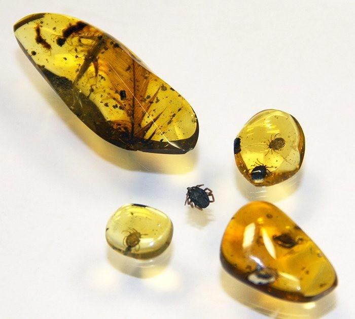 Des tiques emprisonnées dans de l'ambre confirment que les dinosaures étaient aussi à leurs menus