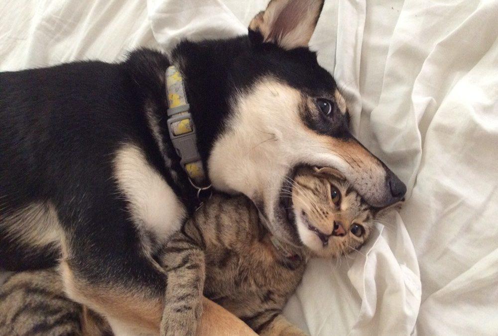 Chien contre chat : qui a le plus de neurones ?