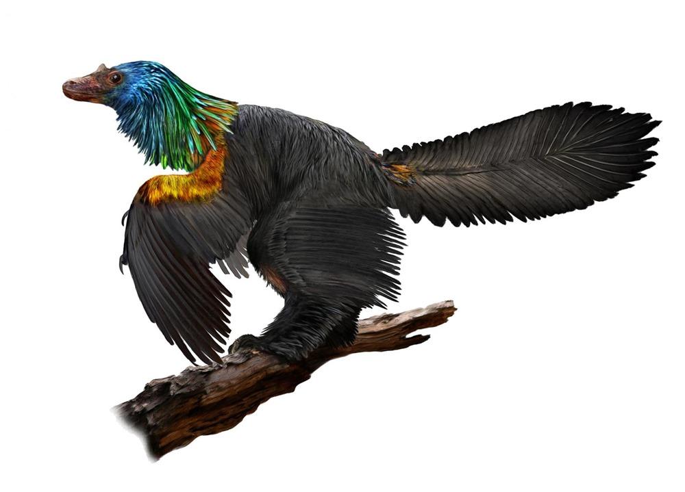 Le premier dinosaure à attirer l'œil de ses prétendantes avec un plumage arc-en-ciel