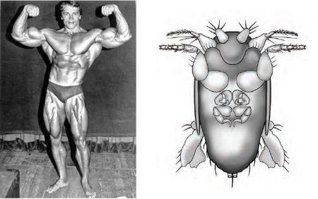 La plus petite mouche connue a pour homonyme Arnold Schwarzenegger
