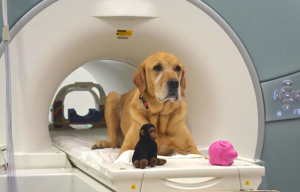 Les chiens peuvent-ils obtenir COVID-19? Un test de réalité pour les parents d'animaux de compagnie