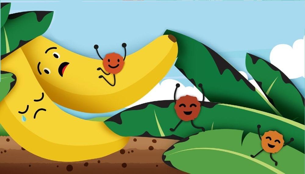 Un peu plus près de l'extinction:le champignon ravageur de la banane débarque en Amérique du Sud