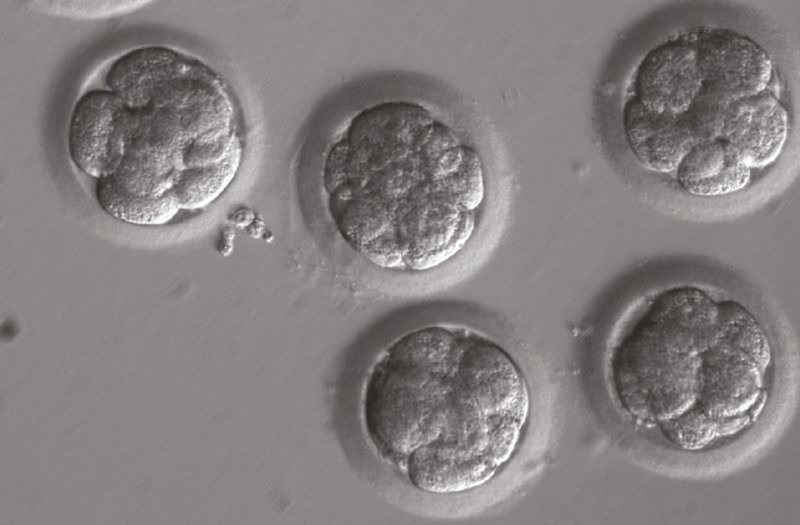 Étude rétractée:la modification génétique des premiers bébés CRISPR ne les condamnera pas à une mort prématurée